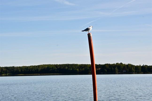 Känner du någon som gjort en extra god gärning för Östersjön?