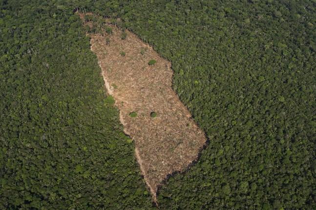 En bit avskogad mark mitt i djungeln i närheten av Porto Velho, Brasilien. Arkivbild.