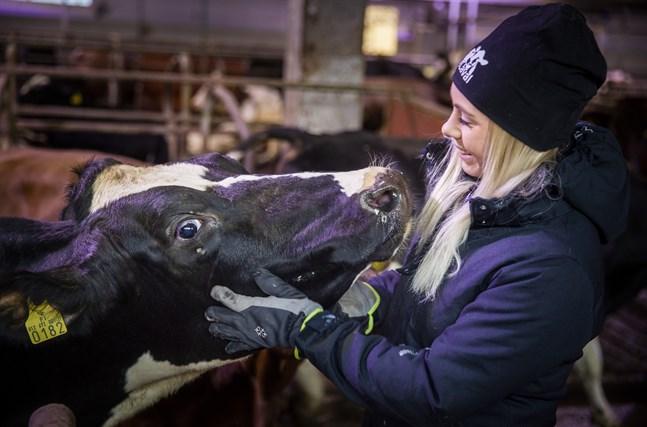 Byråkrati, import och låga producentpriser är böndernas gissel. Sofia Eriksson tycker ändå att det positiva väger upp – hon är fri och får göra det hon älskar.