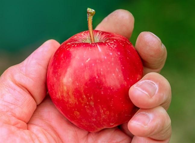 Inte ens ett äpple är okej att ta med sig om man rest utanför EU.