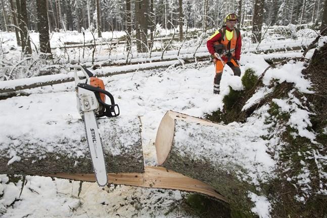På bilden syns en motorsåg från Stihl i samband med en av Skogsstyrelsens utbildningar i Sverige.