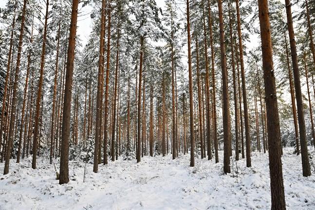 Finland anpassar sina uträkningar efter respons från Europeiska kommissionen och sänker referensnivån för kolsänkan 2021–2025.