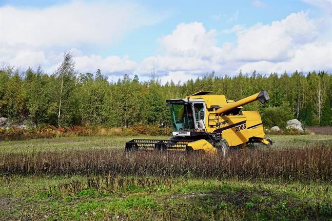 Bondböna lyfts fram i planen som en miljösmart växt som kan odlas i Finland.