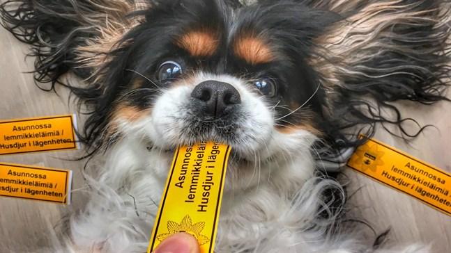 Brandmän vill gärna veta om det finns husdjur i bostaden. Därför delar man ut gratis djurdekaler.