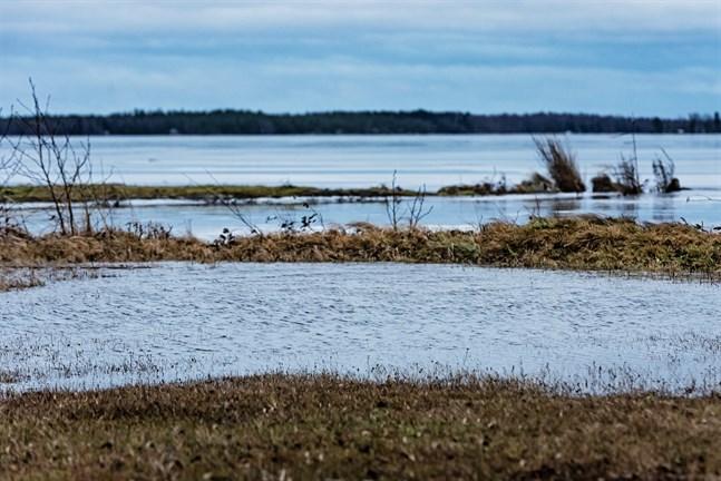 Surheten i Larsmo-Öjasjön och dess tillflöden kollas nu regelbundet. Nya prover tas om två veckor.
