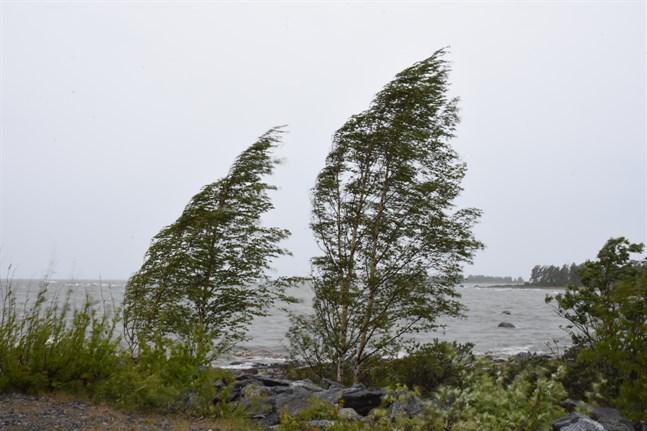 Det blåser hårt i Sydösterbotten.