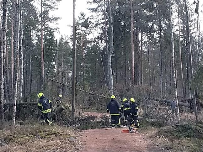 Frivilliga brandkåren i Kristinestad röjde på söndagen upp efter stormen på motionsbanan vid Alesundsvägen. På flera ställen hade träd fallit över ledningarna till belysningsstolparna.
