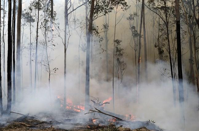 Delar av östra Australien ser fram emot regn som kommer senare i veckan. Här en brand i Bodalla som räddningstjänsten har under kontroll. Bild från i söndags.