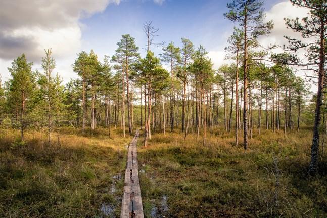 Naturresor, såsom vandringar, har blivit populära bland finländarna.