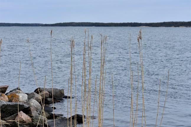 Döda fiskar har sköljt upp på en strand i Kyrkslätt.