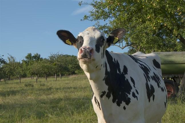 """Utarmningen av """"en levande landsbygd"""" fick sin början med att starka bakgrundskrafter avsiktligt har förhindrat att en ny hållbar jordbrukskunskap skulle ha fått växa fram i jordbruksutbildning och -rådgivning, skriver Levi Sundman."""