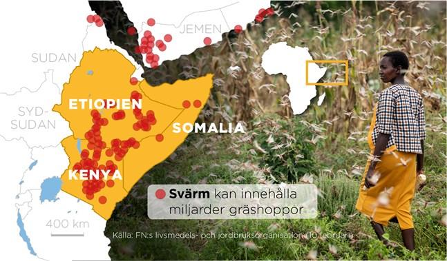 Karta som visar gräshoppssvärmarna i Östafrika.