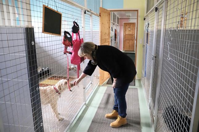 Äppelgårdens djurpensionat har åtta rum för hundar och två för katter. Det här är en lämplig storlek att sköta för två personer.
