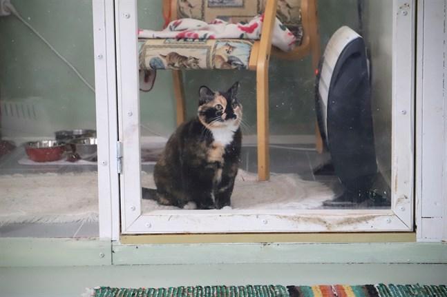 Katten Majsan i sitt rum på Äppelgårdens djurpensionat. Hundar, chinchillor, råttor, hamstrar och fåglar kan också checka in här.