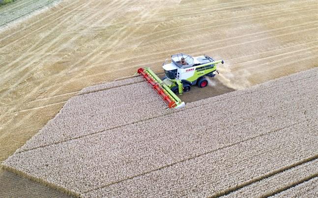 Jordbruket står för ungefär 14 procent av Sveriges totala territoriella utsläpp av växthusgaser.