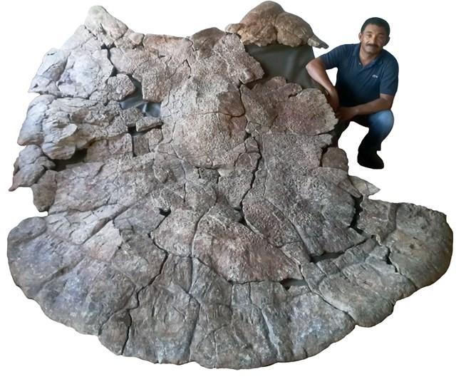 För inte så länge sedan hittade forskarna, däribland paleontologen Rodolfo Sánchez från Venezuela, ett fossil av denna art vars skal var närmare tre meter långt.