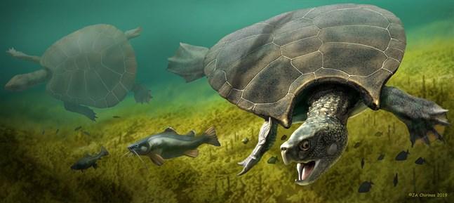 Stupendemys geographicus levde för mellan fem och tio miljoner år sedan i dagens Sydamerika. Den vägde 1145 kg och dess skal blev närmare tre meter långt. Längst fram på ryggskölden vid huvudet hade hannarna två hornliknande utväxter.