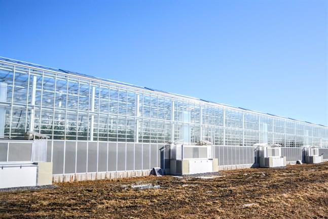Växthus med säsongsodling är de första som nu drabbas av svårigheterna att få säsonsarbetare då gränserna är stängda.