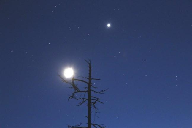 Månen och Venus ganska nära varann i en trevlig konstellation nära horisonten för några veckor sedan. På lördag är det dags igen.