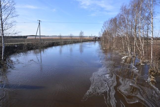 Närpes å hör till de österbottniska vattendrag som varit utsatt för surhet i vinter.
