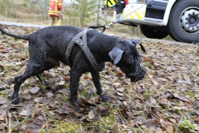 Tur i oturen. Hunden Sotis är blöt, kall och skärrad efter sin upplevelse, men mår trots det bra.
