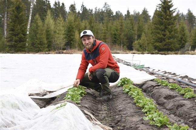 Oskar Ekholm odlar bland annat nypotatis i Kimitoön. Han säger att de ukrainska säsongsarbetarna har hög arbetsmoral. Ekholm brukar anställa tre ukrainare varje sommar.
