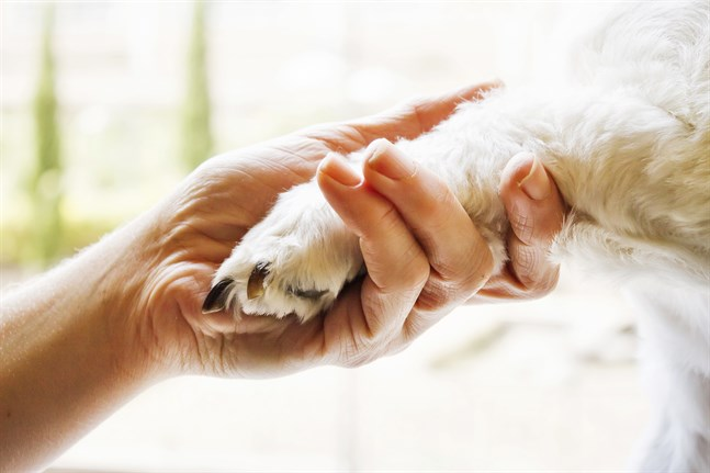 Sokrates kallar hunden en sann filosof och utvecklar också varför. Hundägare eller inte, det finns anledning att ta del av Sokrates resonemang! skriver Ronny Larsson.
