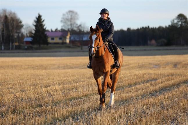 """Eirin Losvik på Calisto, unghästen som blev en del av familjen förra hösten. I stallsnacket går nyförvärvet under namnet """"Alfie""""."""