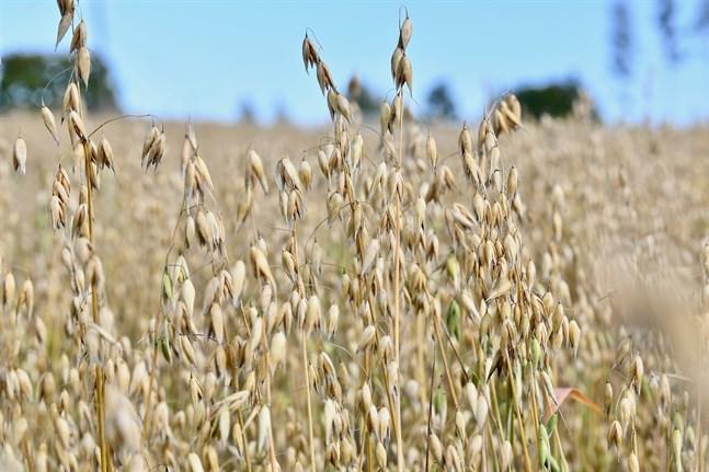 MTK motsätter sig EU:s mål att utöka det ekologiska jordbruket på politiska grunder.