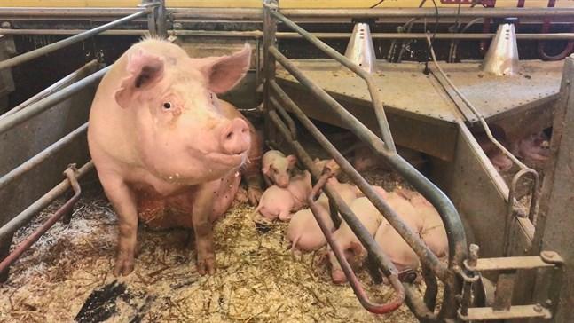 Det nya fryslaget för 4 miljoner euro beskrivs som en strategisk investering för Snellmans Köttförädling Ab.