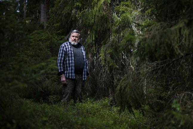 Juhani Koivusaari har jobbat med att försöka rädda havsörnarna i flera decennier. I dag kan han glädja sig åt att stammen räddats och populationen växer i Österbotten.