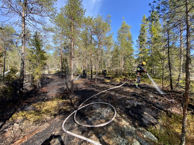 Brandkåren släcker en skogsbrand vi Risöhällvägen i Larsmo.