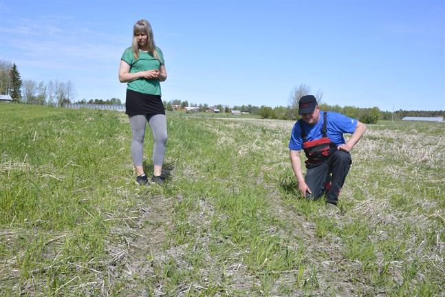 Landsbygdschefen Annica Lind och bonden Jussi Murto-Koivisto inspekterar skadorna efter fyrhjulingar på hans vallodling.