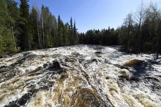 Vandringsleden Vaattunkiköngäs i Rovaniemi är stängd på grund av att älven Raudanjoki svämmat över.