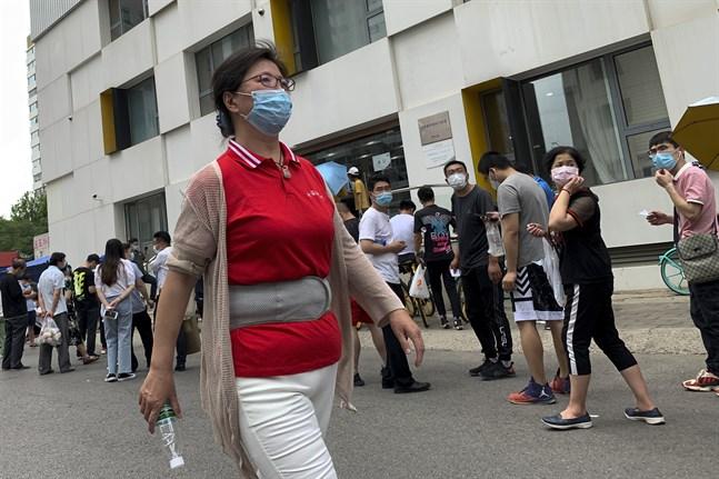 Pekingbor i kö till provtagning.
