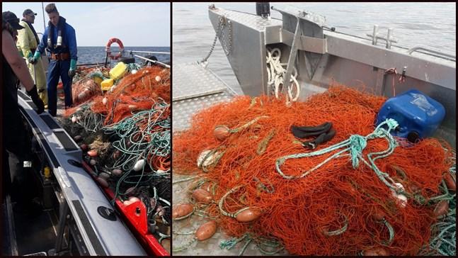 Myndigheterna var ute med fyra båtar för att lyckas avlägsna den stor ryssjan ur havet utanför Nykarleby.