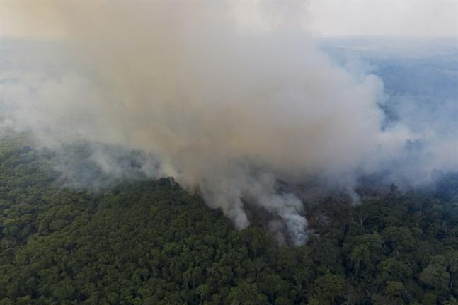 En skogsbrand i Amazonas i november i fjol.