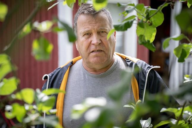 Vart har humlorna försvunnit, undrar Folke Ahlholm i Malax. Han brukar har fullt i äppelträdet men i sommar har han bara sett några på gräsmattan.