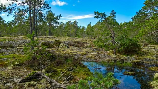 Naturen är som en terapeut som helar dig med sina tröstande ord, skriver Hans Ingvesgård.
