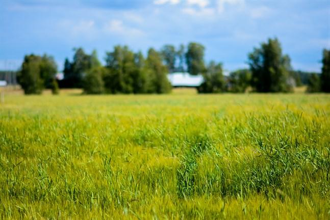 Jordbruket står för 28 procent av Finlands utsläpp av växthusgaser. 75 procent av det kommer från åkermark.