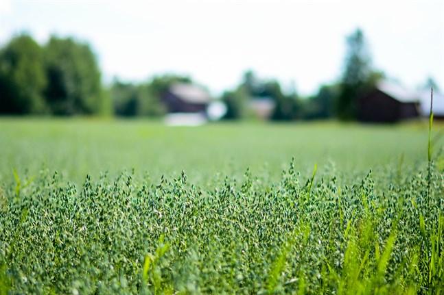 Lönsamhet i jordbruket kan inte uppnås med hjälp av stöd, anser skribenten.