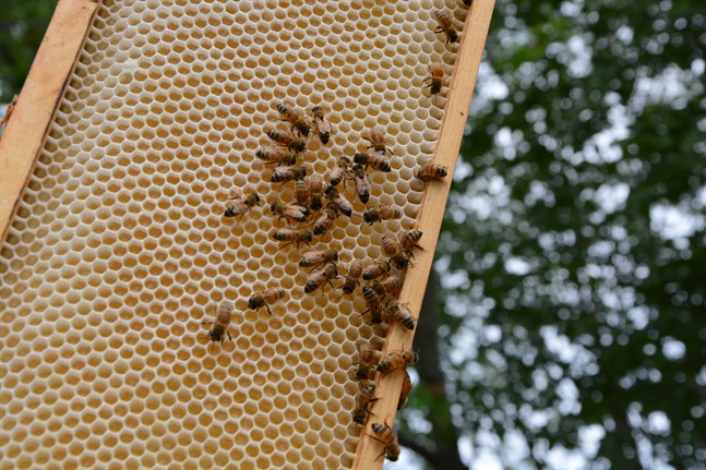 Förutom att bina ger oss honung är de också livsnödvändiga för vår matproduktion.