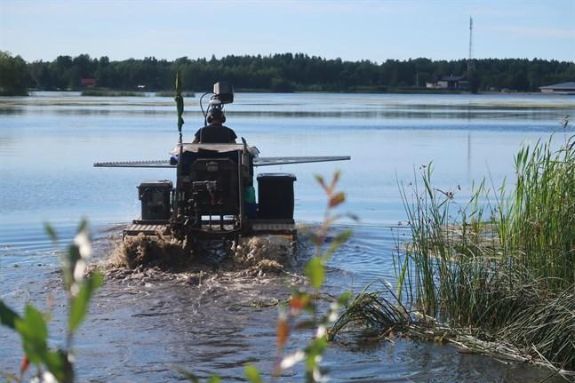 En båt som också går på land klipper och samlar in vassen och säven. Det är företaget Service KE-Trading som bidrar med klippningen med den här maskinen.