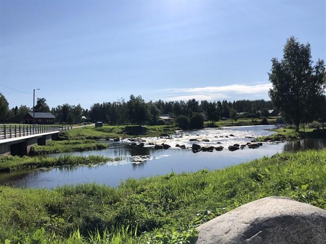 Det har varit extremt lågt vatten i åar och sjöar i juli, även i Esse å.