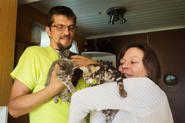 Kattungarna Bandido, Bulle och Blygis lever och mår bra.