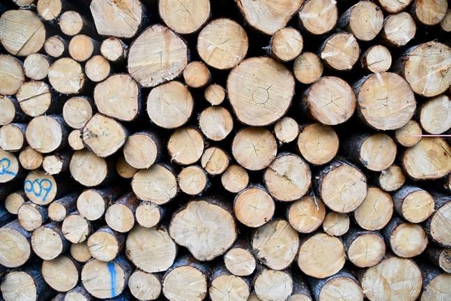 De senaste åren har användningen av trä i offentligt byggande ökat kraftigt, i synnerhet inom undervisnings- och småbarnspedagogiksektorn.