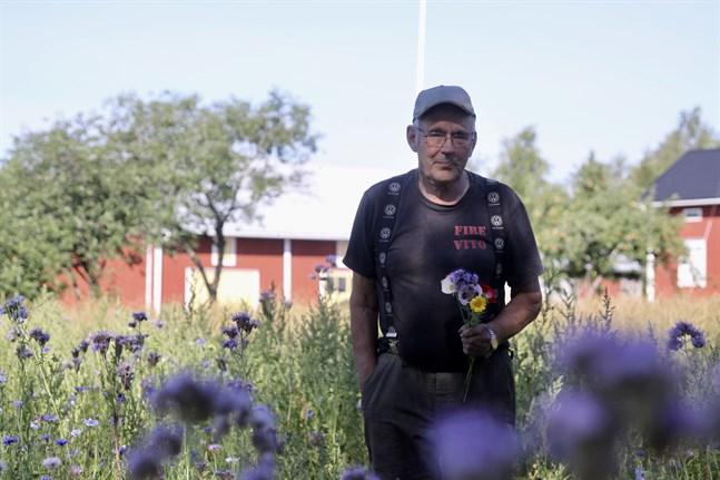 Här ska du få en bukett med dig, säger Bo-Göran Ingves och plockar ihop en bukett bestående av blåklint, kornvallmo, honungsblomma och ringblomma.