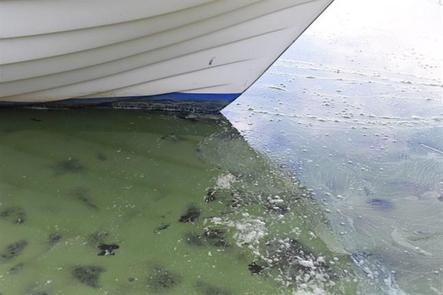 Man har sett små mängder av blågröna alger på flera håll i Österbotten.