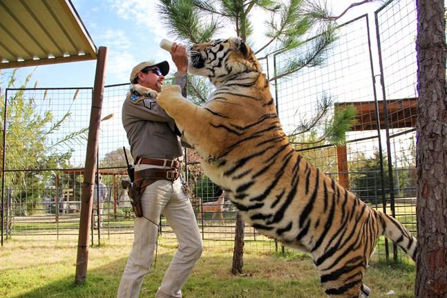 """Det zoo som är skådeplats för Netflixserien """"Tiger king"""" stängs. Arkivbild."""