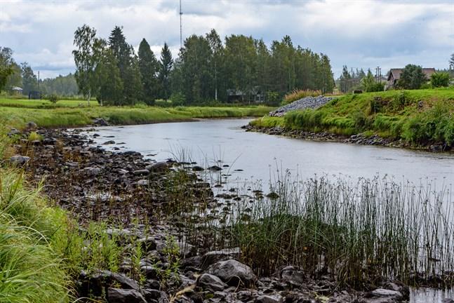 Lågt vattenstånd i Esse å vid Värnum.